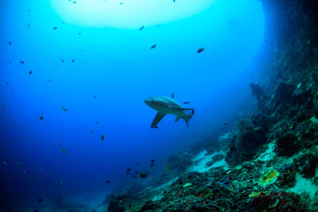 filippine-mare